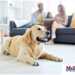 Tips on Maintaining Indoor Air Quality in Households With Pets